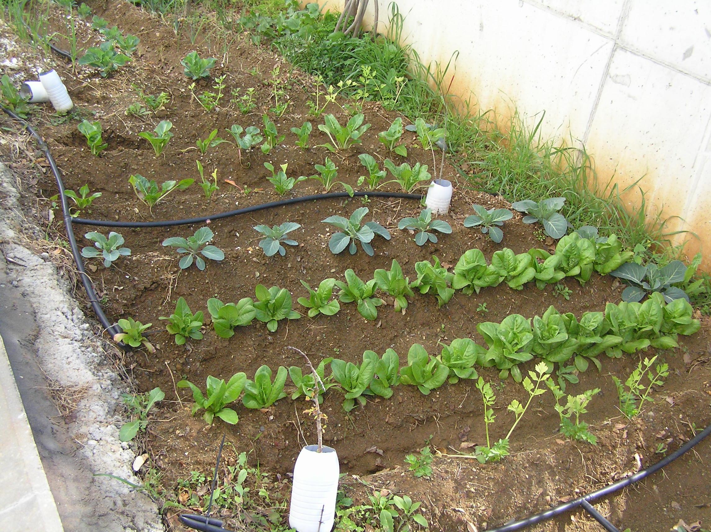 16 febrero 2015 i e s eduardo janeiro for Plantas beneficiosas para el huerto